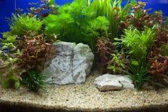 Plant aquarium Stock Image