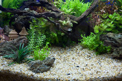 Plant aquarium. Artificial aquarium decorated with plants and sandstones Stock Photo