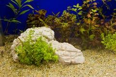 Plant in aquarium Stock Photography
