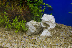 Plant in aquarium Stock Image