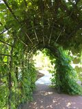 Plant archway Royalty Free Stock Photography