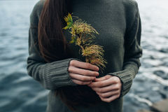 Plant in arms. Beginning of spring. Plant in arms Royalty Free Stock Image