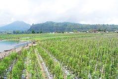Plant around The lake Batur Stock Photos