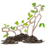 Plant arrow Royalty Free Stock Image