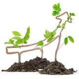 Plant arrow Stock Photo