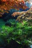 Plant back light. Leaves in back light, garden in italian villa Royalty Free Stock Photos