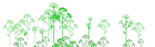 Plant background. Decorative plants on white back Stock Photo