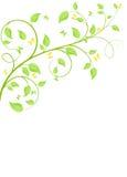 Plant background Royalty Free Stock Photos