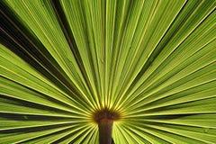 Plant Background Royalty Free Stock Image