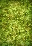 Plant_background_green Stock Photo