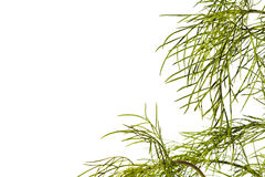 Plant Background Royalty Free Stock Images
