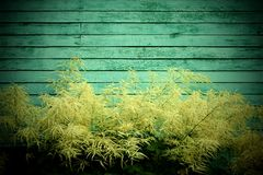Plants against the wall background Stock Photos