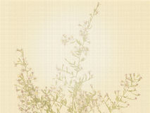 Plant Background stock images