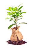 Plant bag Royalty Free Stock Image