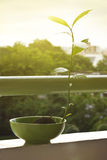 Plant on balcony in sunshine Stock Images