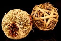 Plant balls. Royalty Free Stock Photography