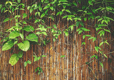 Plant on bamboo Royalty Free Stock Photos