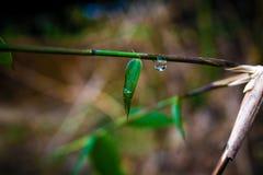 Leaf water drop Stock Photo