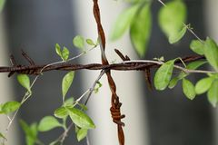Plant on barbed wire Royalty Free Stock Photography