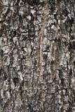 Plant bark 2. Close up of hard and square cracked bark Stock Photo