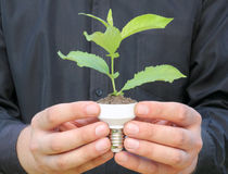 Plant in a base of energy-saving bulb Royalty Free Stock Images