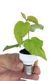 Plant in a base of energy-saving bulb Royalty Free Stock Photo