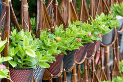 Plant basket decoration Royalty Free Stock Image