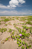 Plant on the beach Royalty Free Stock Photo