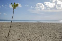 Plant with a beach on the background. Sea and beach simple landscape with a branch of plant Stock Photo