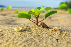 Plant and Beach. Plant on the beach in morning royalty free stock images