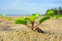 Plant and Beach. Plant on the beach in morning stock photos