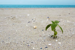 Plant on the beach Stock Image