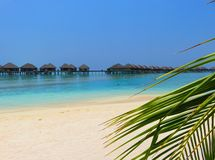 Plant with beach and sea of Maldives. Stock Photo