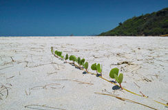 Plant on the beach Stock Photos