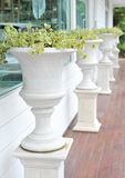 Plant in big ceramic pot Stock Photography