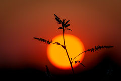 Plant on big sun background Royalty Free Stock Photos