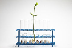 Plant biotechnology research - Series 2 Royalty Free Stock Image