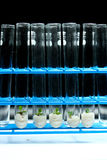 Plant biotechnology Series 9 Stock Photography