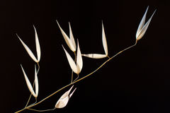 Plant on black background. Plant on the black background Royalty Free Stock Photography