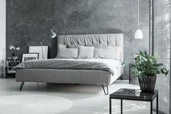 Inspiring grey bedroom with plant Stock Photography