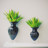 Plant in black vase decorated for room, retro filter Royalty Free Stock Image