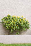 Plant and blank wall Royalty Free Stock Photography