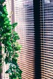 Plant and blind. Hanging plant and a window with a blind, focus on the plant royalty free stock photography