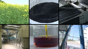 Plant blooms. seed oil biofuel production. Footage collage.