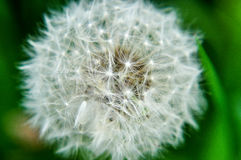 Plant blowing by the wind Stock Photo