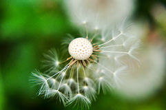 Plant blowing by the wind Royalty Free Stock Image
