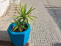 Plant in a blue flowerpot, color element, beautiful blue color. Flower in a pot on the street stock photos