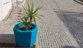 Plant in a blue flowerpot, color element, beautiful blue color. Flower in a pot on the street stock photo