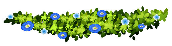 Plant with blue flowers Royalty Free Stock Photography