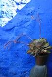 Plant and Blue Wall - Santa Catalina. Inside the ancient Santa Catalina convent in Arequipa, Peru royalty free stock image